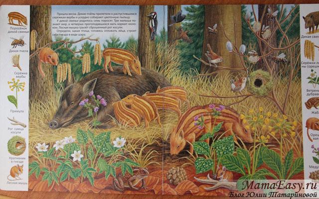 Книга для рассматривания с животными