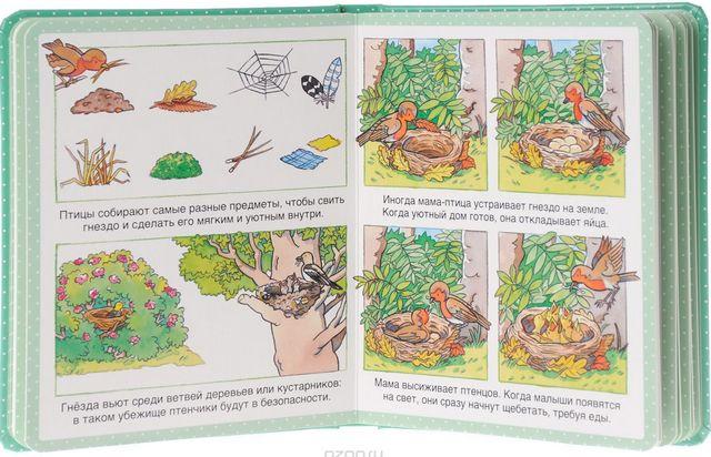 Энциклопедия для малышей Махаон