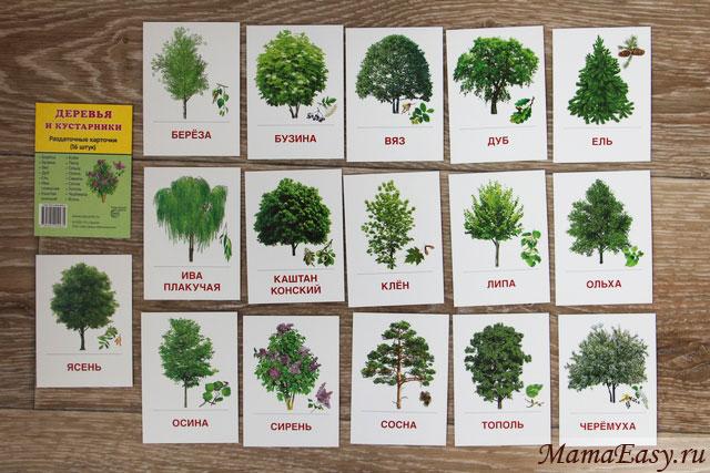 Раздаточные карточки Деревья и кустарники